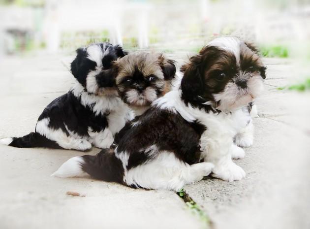 Najlepszy pies dla dzieci i alergików